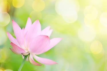 Jade Path Acupuncture & Herbal Medicine